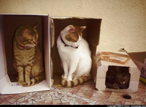 Cats n' boxes by Fonzu