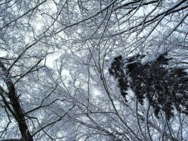 Winter trees II by akonit
