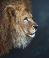 Lion Study by XeNzO