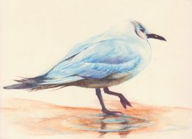Seagull Watercolor Pencil by phantastes