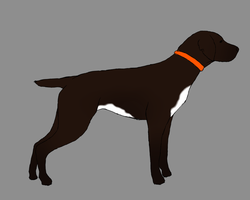 .:Dog For Paris:. by RodeoLuvr