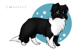 Border Collie by discosquirrel