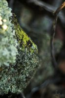 I'm Lichen this Lens by datazoid
