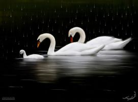 swans2 by Graphicad3m