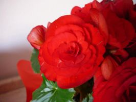 red flowers by Dyda81
