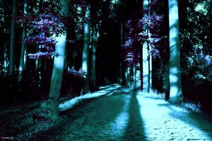 my forest by rxnlp