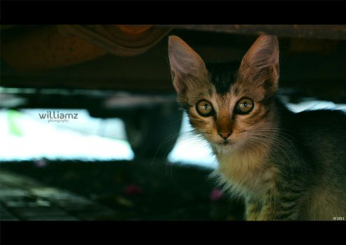 cat by williamzphotography