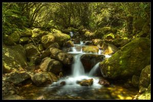 Jungle River by OakBark
