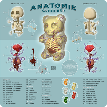 Anatomie Gummi Bar by freeny