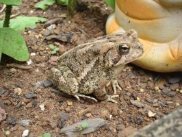 Frog In Garden by aragornsparrow