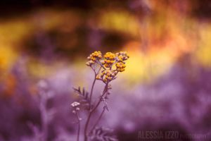 Orange and Purple by Alessia-Izzo