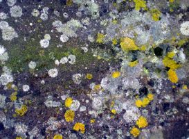Stock texture - Stone and Lichen II by rockgem