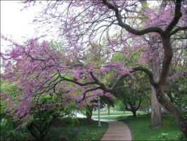 Pink Tree 2A by vincegotera