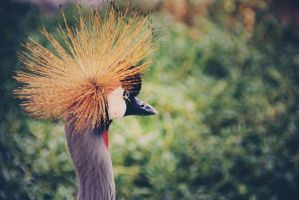 Crown Crane - Edited 2 by lostreality91