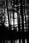 Black Woods by pics-by-shah