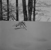 Beta - Ilford - buried by Picture-Bandit