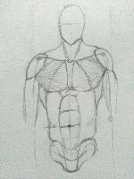 Anatomy and Proportions (Male) by Lone-Wolf009