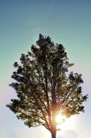 Tree of Life by EmersonStem