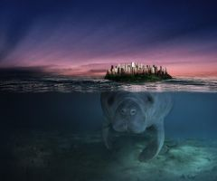 Manatee by Leitor