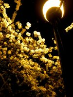 Streetlight Meet Flowers by PrototypeVX2