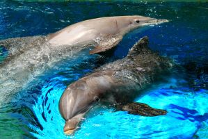 Double Dolphin by Celem