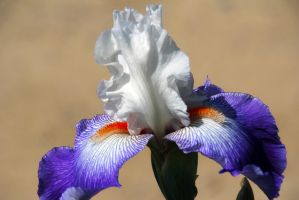 Everyday A New Beginning by Vividlight