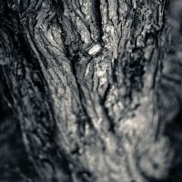 Branchless by arctoa