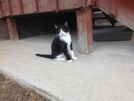 Cat under my porch by KingSexyStudKitty