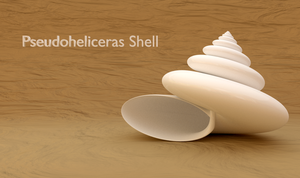 Pseudoheliceras Shell by AnthonyRalano