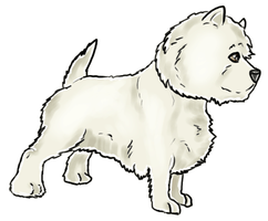 West-Highland White Terrier by clotus
