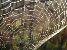 Web by aster-lili