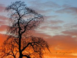 Strange Tree Silhouette... by Michies-Photographyy