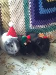 Christmas Pigs by QFCgriffin1fan