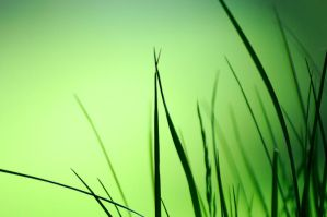 Bokeh Grass by Lorddarphyve