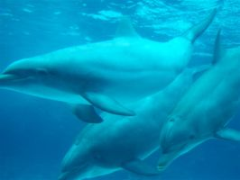Dolphins by TheCauseOf