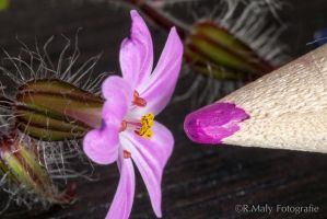 A tiny flower by TLO-Photography