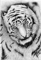 White Ink Tiger by Yang-tze