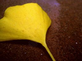 Yellow On Brown by jemgirl