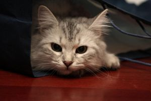 Cat In The Bag by Mischi3vo