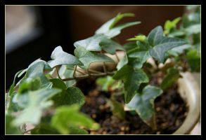 Potted Leaves by powowcow