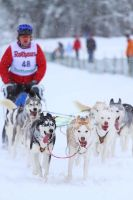 Todtmoos: Sled dog Race by Maaira