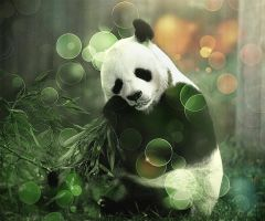 Panda, Bambu.... by GoldTamerMan
