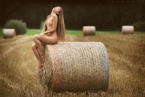 The Field Of Heaven by artofdan70