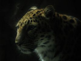 From the Night by Allison-beriyani