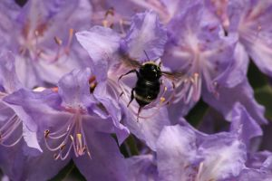 Busy Bee by Kempsridle