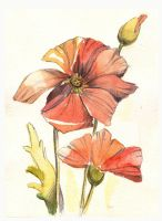 Poppies. by lazygirl-29