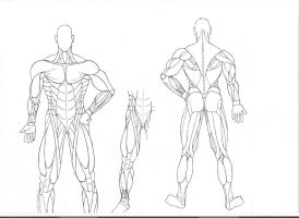 Human Anatomy - Pure Muscles by Shindoh