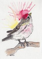 Common Red Poll by IckyDog