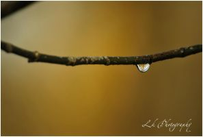 natura se trezeste II by Lk-Photography