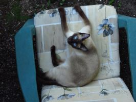 You Know... I Like This Patio Chair by Kitteh-Pawz